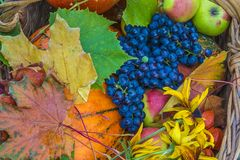 Autumn composition with fruits and vegetables royalty free stock photos