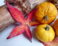 An autumn composition of gourd pumpkins and leaves Stock Photos
