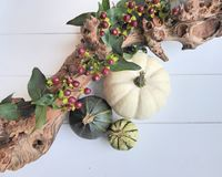 An autumn composition of gourd pumpkins, red berries and a branch Royalty Free Stock Images