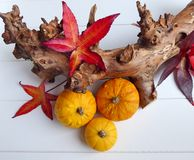 An autumn composition of gourd pumpkins, red leaves and a branch Royalty Free Stock Photography