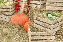 Autumn Composition With Large Pumpkin i Straw Background Arkivbild