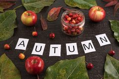 Autumn composition with leaves, apples and sign Stock Photos