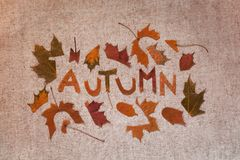 Autumn composition with leaves. Autumn flat lay cut out letters from dry leaves, the word autumn, handicraft, textural background, hobbies and apposition royalty free stock images