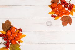 Autumn composition of lleaves, physalis, Rowan on white wooden backgroundFrame made of autumn dried leaves on white background. Fl royalty free stock photography