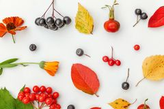 Autumn composition made of autumn plants viburnum, chokeberry rowan berries, dogrose, leaves and flowers on white background stock photo