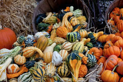 Autumn composition. Multicolored pumpkins in autumn composition collected from the farm shop Stock Photos