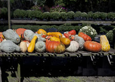 Autumn composition. Multicolored pumpkins in autumn composition collected from the farm shop Royalty Free Stock Photo