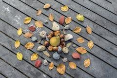 Autumn Composition natural Imágenes de archivo libres de regalías