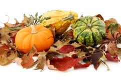 Autumn Composition No. 1 Stock Photo