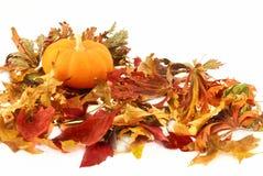 Autumn Composition No. 3 Stock Images