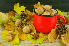 Autumn composition: nuts, acorns and cones on the background of Royalty Free Stock Images