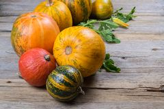 Autumn Composition Of A Different Varieties And Colors Of Pumpkins Royalty Free Stock Photography