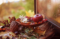 Autumn composition Royalty Free Stock Images