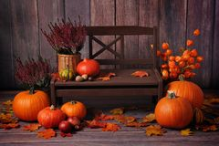 Autumn composition with orange pumpkins at a brown bench royalty free stock photography