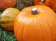Autumn composition with orange pumpkins on the grass royalty free stock photo