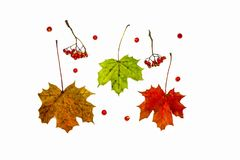 Autumn composition. Pattern made of autumn berries and leaves. stock images