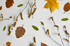 Autumn composition. Pattern made of dried leaves, birch branches on white wooden background. Autumn flat background. Flat lay, top royalty free stock photos