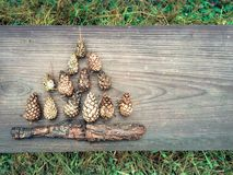Autumn composition of pine cones Royalty Free Stock Image