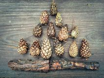 Autumn composition of pine cones Royalty Free Stock Images