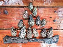 Autumn composition of pine cones Royalty Free Stock Photography