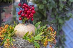 Autumn composition with pumpkin, flowers and red berries royalty free stock photo