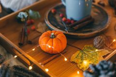 Autumn composition with pumpkin Royalty Free Stock Photography