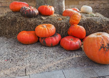 Autumn composition of pumpkins Stock Photos