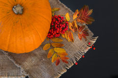 Autumn composition of pumpkins, leaves, and berries royalty free stock photo