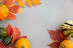 Autumn composition. Pumpkins, leaves on pastel gray background. Autumn, fall, halloween concept. Flat lay, top view, copy space royalty free stock photo