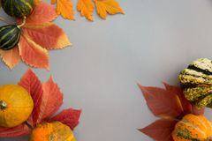 Autumn composition. Pumpkins, leaves on pastel gray background. Autumn, fall, halloween concept. Flat lay, top view, copy space royalty free stock photography