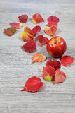 Autumn composition: red apple and colorful leaves Stock Photo