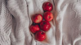 Autumn composition. Red apples in a knitted white sweaters. Quiet cozy homely scene. harvesting, crop, harvest. Concept autumn royalty free stock photography