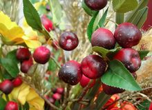 Autumn composition with red berries on a background of yellow flowers royalty free stock image