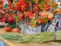 Autumn composition with red-green maple leaves and pumpkins stock images