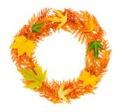 Autumn composition. A round wreath of autumn red twigs of thuja and maple leaves on white background with copy space. mock up for text, congratulations Royalty Free Stock Images