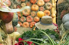 Autumn composition with a straw hat and pumpkins royalty free stock photos