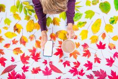 Autumn composition: top view hands holding cup of coffee and smatrphone with blank screen on fallen leaves gradient colorful rainb stock photography