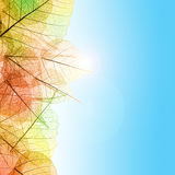 Autumn composition with transparent Leaves and blue sky Royalty Free Stock Photography