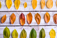 Autumn composition. Various colorful leaves. Studio shot Stock Images