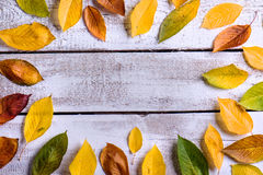 Free Autumn Composition. Various Colorful Leaves. Studio Shot, Wooden Royalty Free Stock Image - 76475006