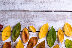 Autumn composition. Various colorful leaves. Studio shot, wooden Royalty Free Stock Images