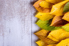 Autumn composition. Various colorful leaves. Studio shot, wooden Stock Image