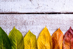 Autumn composition. Various colorful leaves. Studio shot, wooden Royalty Free Stock Image