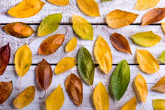 Autumn composition. Various colorful leaves. Studio shot, wooden Stock Photos