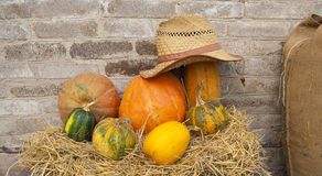 Autumn composition from various pumpkins Stock Images