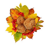 Autumn composition with walnuts, berries and dried leaves Royalty Free Stock Image