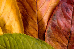 Autumn composition, wet colorful leaves. Studio shot. Stock Photos