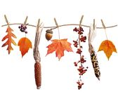 Autumn composition on white background. Colorful autumn leaves berries and seeds arrangement isolated on white background royalty free stock photos