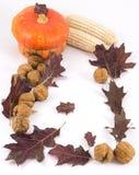Autumn composition on white background Royalty Free Stock Photo