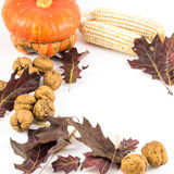 Autumn composition on white background Stock Photography